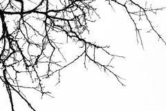 абстрактная предпосылка halloween Черная ветвь дерева на белом b Стоковые Изображения RF
