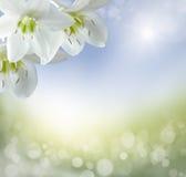 Предпосылка весны стоковые изображения