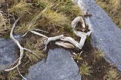 абстрактная предпосылка ветвь сухая Стоковые Фотографии RF