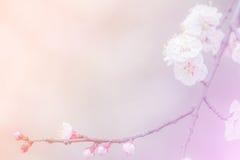 Абстрактная предпосылка вишневого цвета Стоковая Фотография