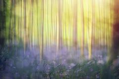 Абстрактная предпосылка леса весеннего времени Стоковые Изображения RF
