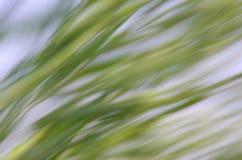 абстрактная предпосылка естественная Стоковая Фотография RF