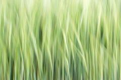 Абстрактная предпосылка зерна Стоковая Фотография RF