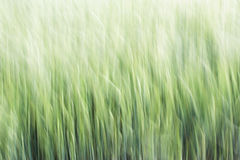 Абстрактная предпосылка зерна Стоковое Фото