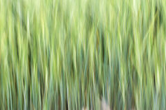 Абстрактная предпосылка зерна Стоковое фото RF