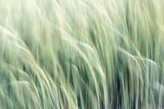 Абстрактная предпосылка зерна Стоковые Фотографии RF