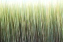 Абстрактная предпосылка зерна Стоковая Фотография