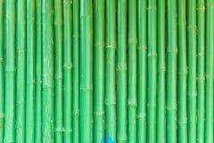 Абстрактная предпосылка зеленого китайского бамбука Стоковое Изображение
