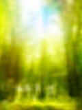 Абстрактная предпосылка зеленого цвета весны пущи стоковая фотография rf
