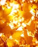 Абстрактная предпосылка листвы Стоковая Фотография