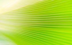 Абстрактная предпосылка лист ладони запачканная Стоковые Фотографии RF