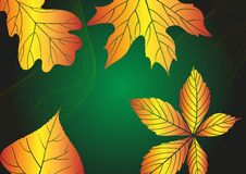 Абстрактная предпосылка осени. Стоковое Фото