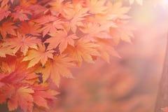 абстрактная предпосылка осени Стоковые Фото