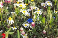 Абстрактная предпосылка покрашенных цветков Стоковая Фотография RF