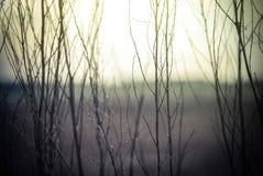 Абстрактная предпосылка природы в винтажных полевых цветках стиля Стоковые Изображения