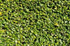 Абстрактная предпосылка природы зеленых листьев Стоковые Фотографии RF