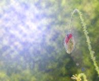Абстрактная предпосылка с бутоном цветка Стоковая Фотография RF
