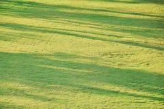 Абстрактная предпосылка тени дерева на поле травы Стоковое Изображение RF