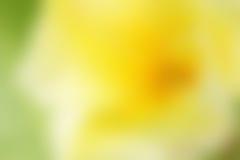 абстрактная предпосылка цветастая Пустой космос экземпляра Стоковое Фото