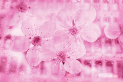 Абстрактная предпосылка цветка высокой технологии Стоковое фото RF