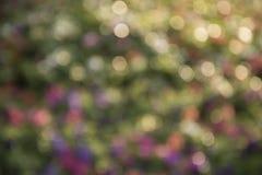 Абстрактная предпосылка bokeh парка города нерезкости, абстрактная красочная предпосылка Стоковое фото RF