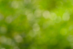 абстрактная природа зеленого цвета bokeh предпосылки Стоковая Фотография RF