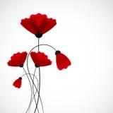 абстрактная природа предпосылки цветет красный цвет мака Стоковые Изображения RF