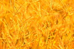 абстрактная природа предпосылки Стоковая Фотография