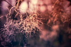 абстрактная природа предпосылки стоковое фото