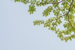 абстрактная природа Стоковая Фотография