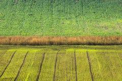 Абстрактная притяжка зеленых полей Стоковое Изображение