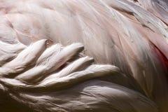 абстрактная птица предпосылки Стоковые Изображения RF
