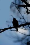 Абстрактная птица Стоковые Фото