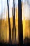 абстрактная пуща осени Стоковые Изображения