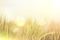 Абстрактная пшеница с ретро влиянием Стоковые Изображения