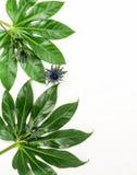 Абстрактная рамка сделанная из зеленых тропических листьев Стоковое Фото