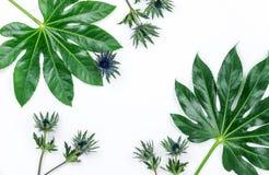 Абстрактная рамка сделанная из зеленых тропических листьев Стоковая Фотография