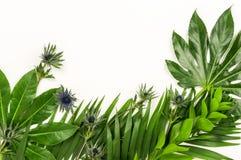 Абстрактная рамка сделанная из зеленых тропических листьев Стоковое Изображение RF