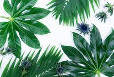 Абстрактная рамка сделанная из зеленых тропических листьев Стоковое фото RF