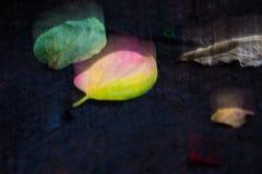 Абстрактная расплывчатая картина листьев Стоковые Изображения RF