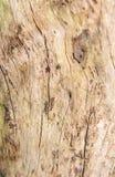 Абстрактная расшива дерева Стоковое Изображение