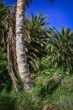 абстрактная древесина ствола дерева текстуры ладони детали предпосылки Стоковые Изображения RF