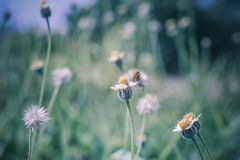Абстрактная сболтнутая предпосылка и трава цветка, солнечный свет поля и Стоковое фото RF