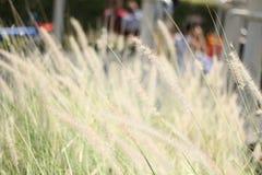 Абстрактная сболтнутая предпосылка и трава цветка, солнечный свет поля и Стоковые Фото