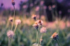 Абстрактная сболтнутая предпосылка и трава цветка Стоковые Фотографии RF