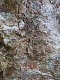 Абстрактная серая деревянная текстура Расшива выдержанная темнотой Корка w Брайна Стоковое Фото