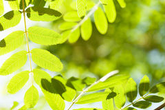 Абстрактная солнечная предпосылка bokeh лета Стоковое Фото