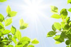 Абстрактная солнечная предпосылка bokeh лета Стоковые Фотографии RF