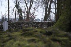 Абстрактная стена дерева Стоковые Фото