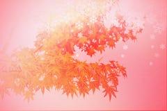 Абстрактная сцена зимы листьев осени, тень силуэта красного клена с хлопь снега на красной предпосылке Стоковое Фото
